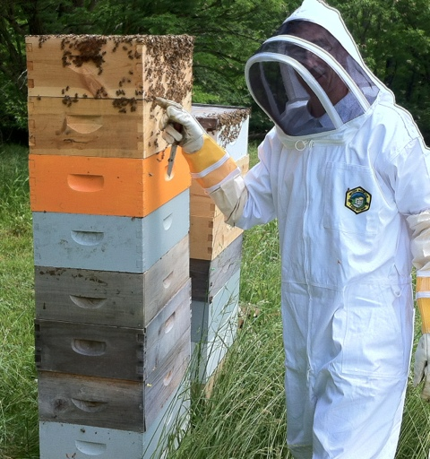 Hive Management – TwoHoneys Bee Co