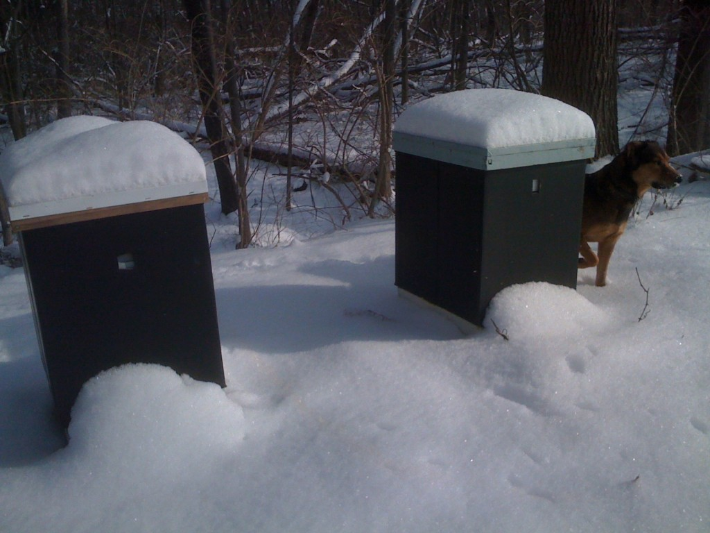 Bee hives (and Murphy) in snow