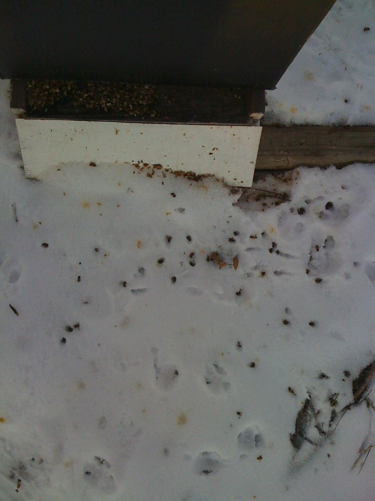 Dead bees in snow
