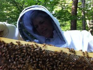 Bee Stewardship
