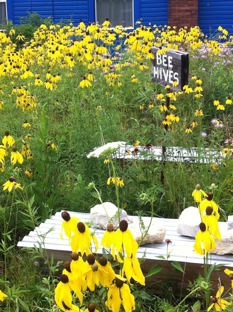 Brazee Street Studios: Prairie Flowers and Honeybee Hives