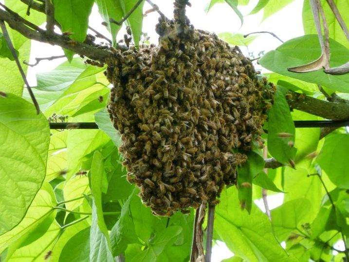 Swarm! copy