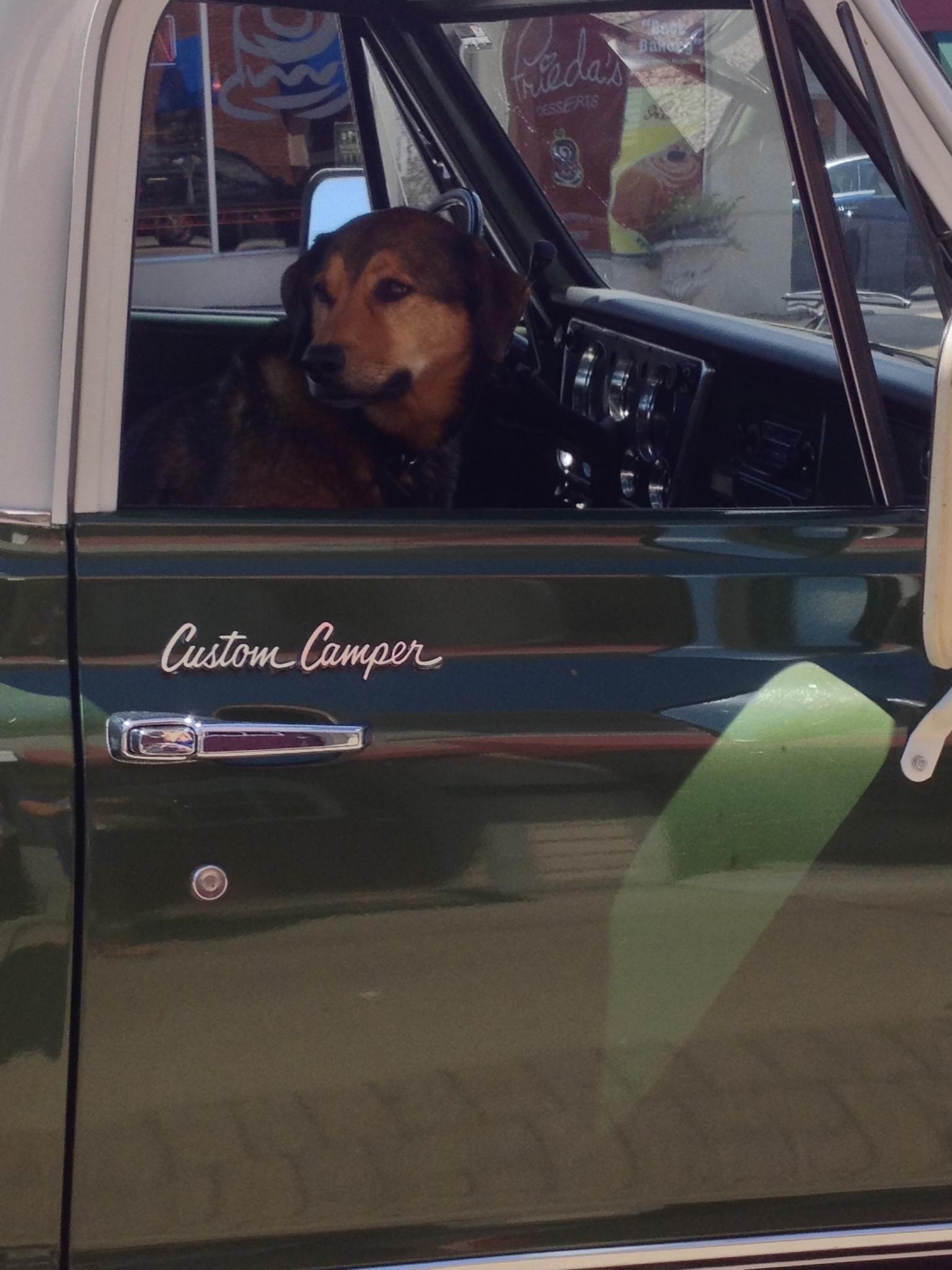 Murphy waits in the truck