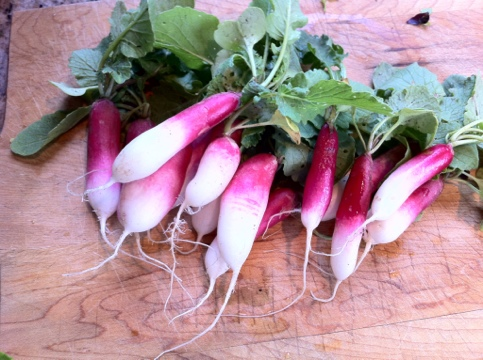 Radishes from Amy