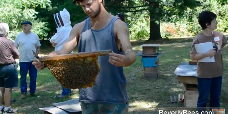 Sam Comfort harvesting honey